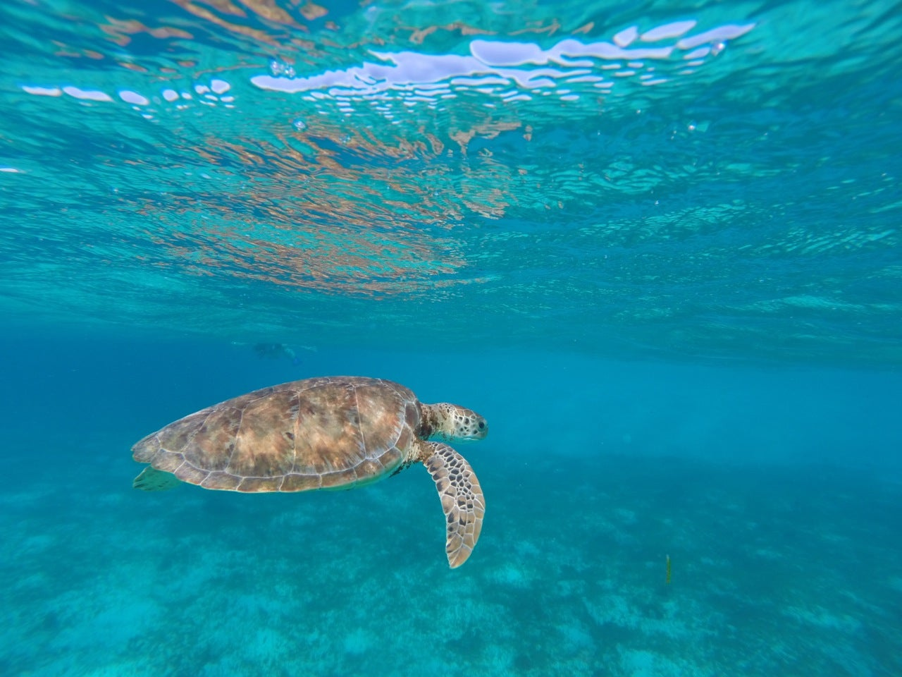 Turtle in Saint Vincent and the Grenadines