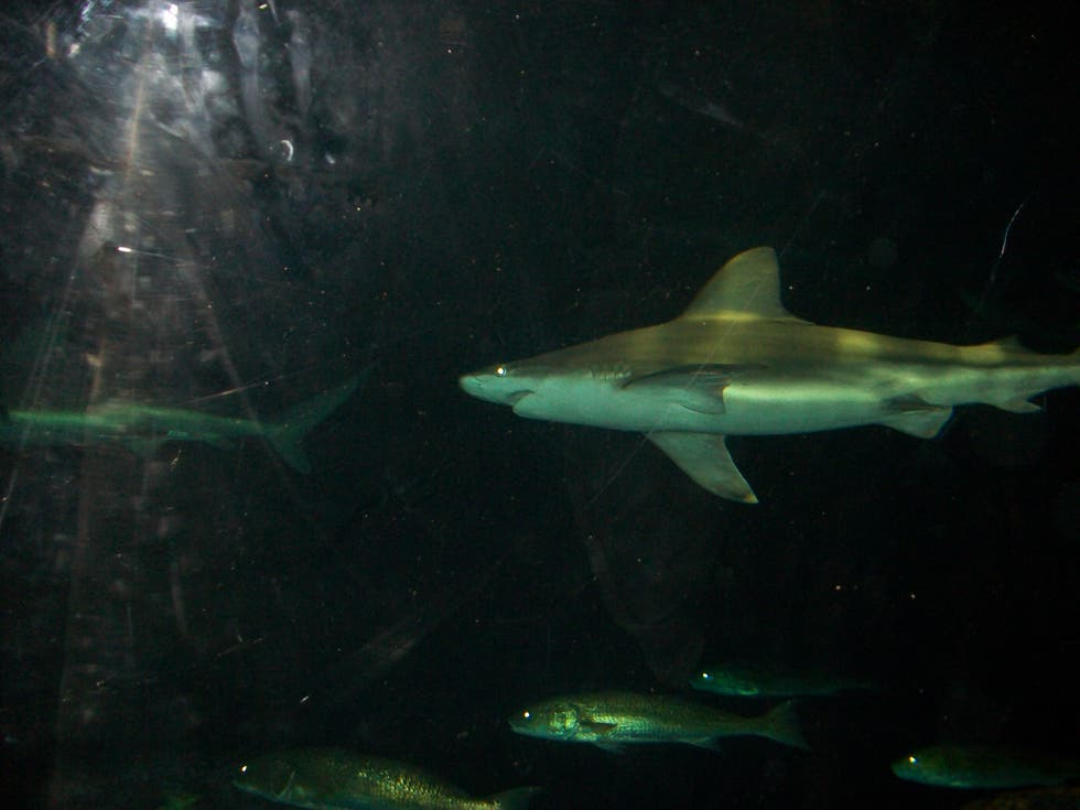 Acuario en Shark Encounter