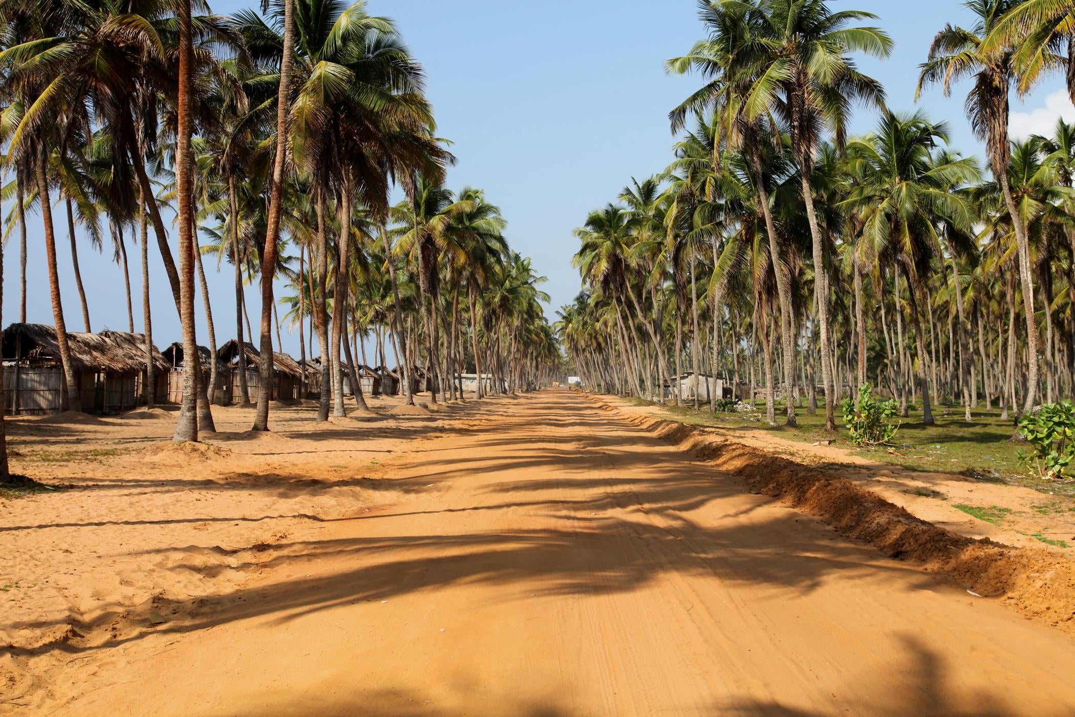 Vegetation in Cotonou