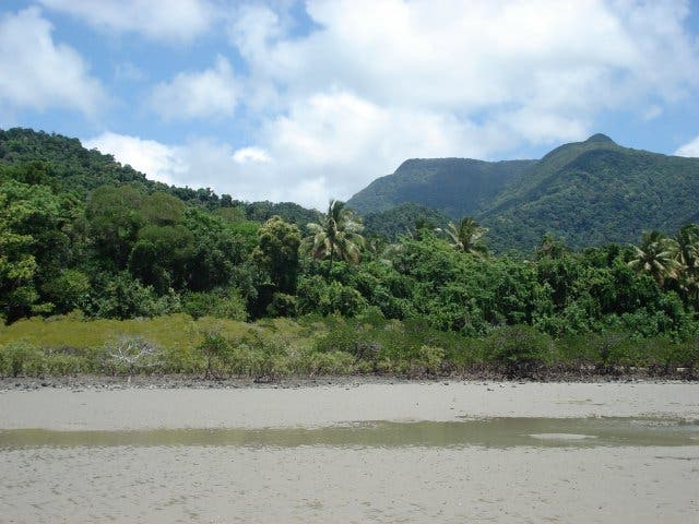 Naturaleza en Cape Tribulation