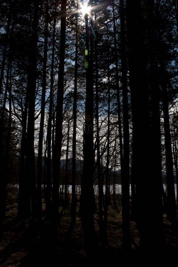 Forest in Aviemore