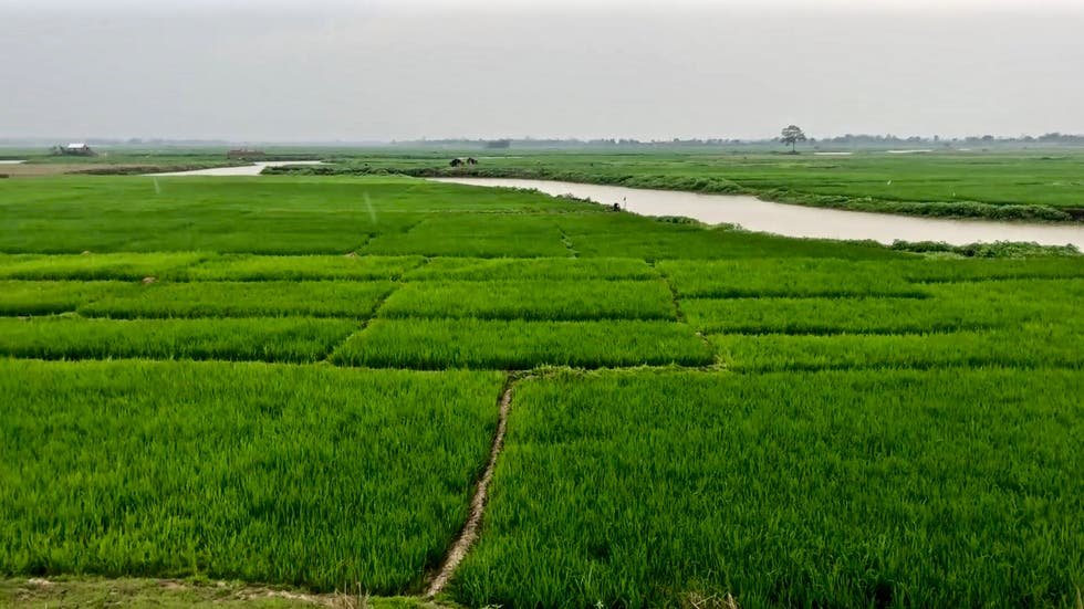 Agriculture in Ranaghat