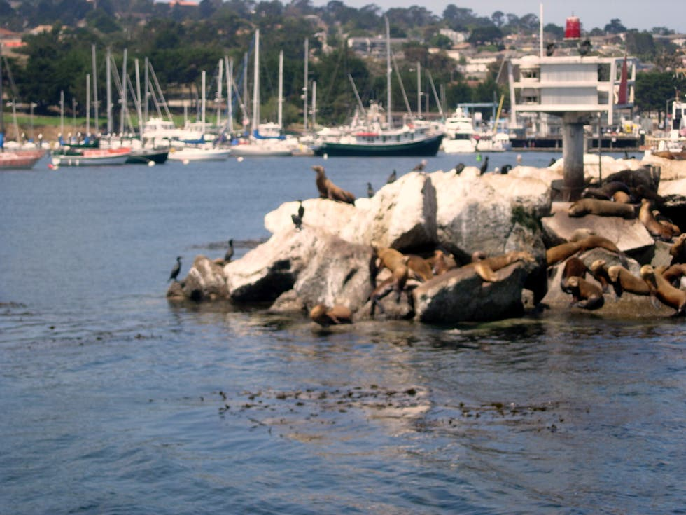 Orilla en Monterey Bay Whale Watch