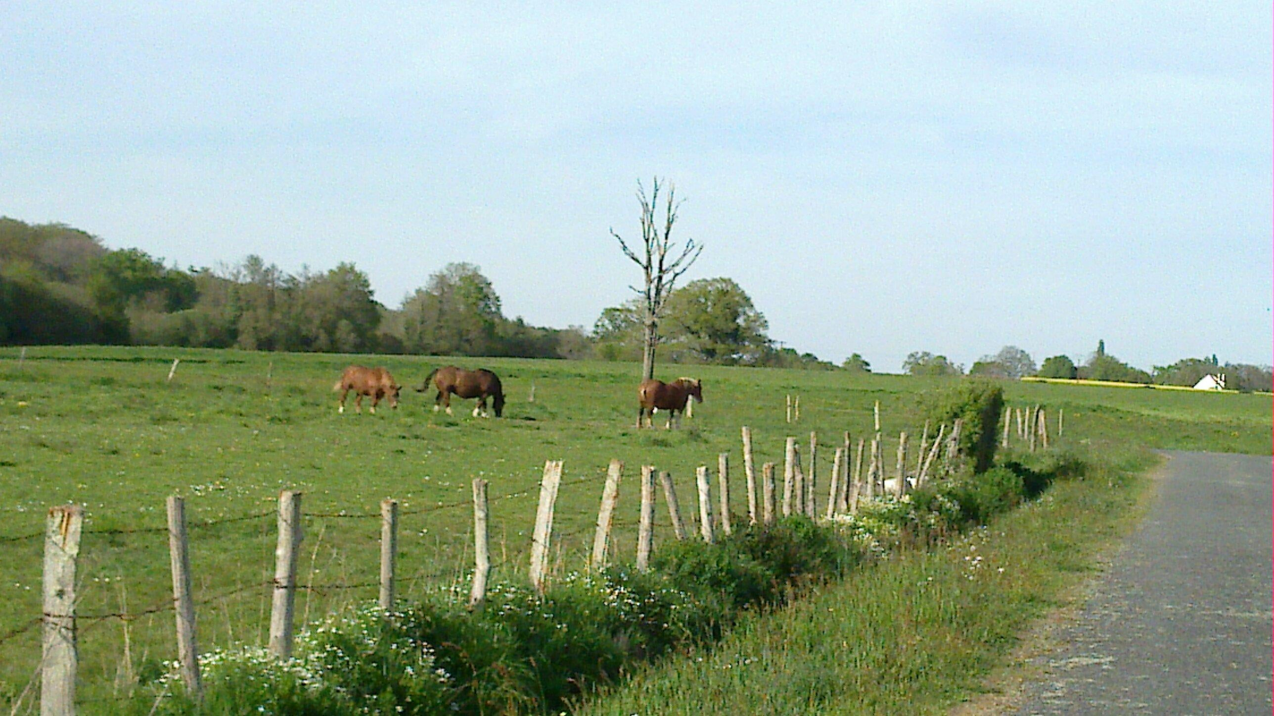 Farm in Le Gâvre