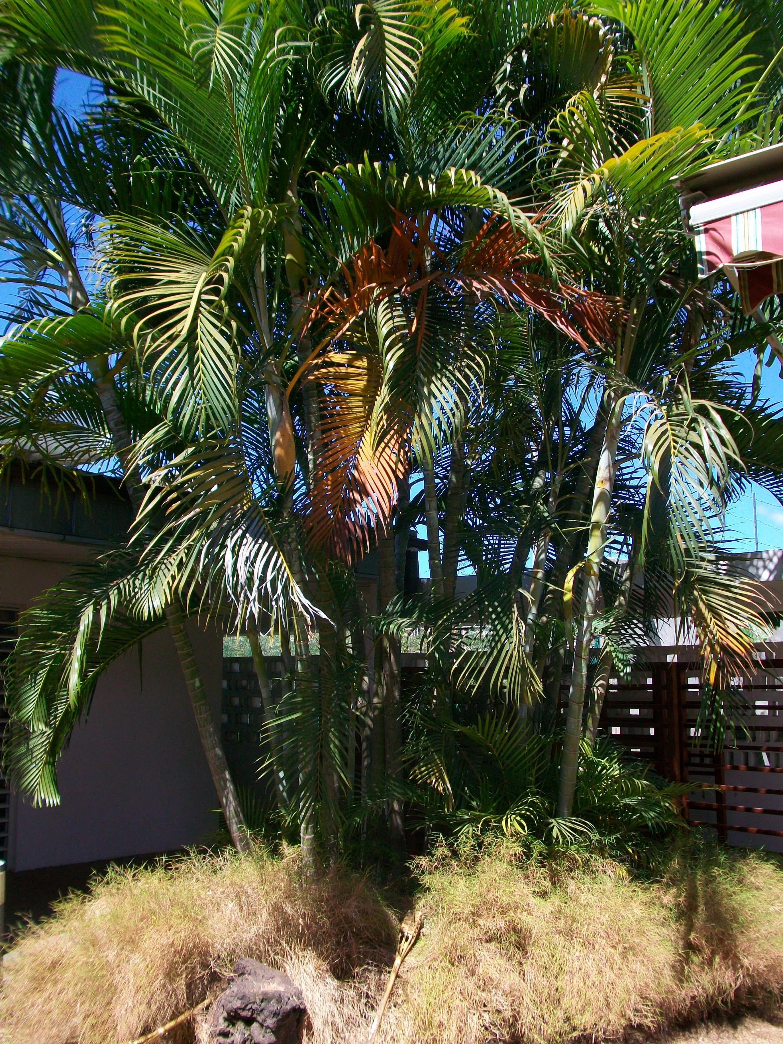 Plant in Mayotte