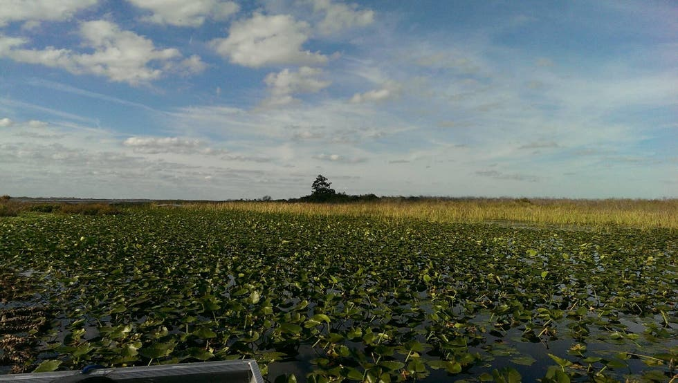 Amarillo en Kissimmee Swamp Tours