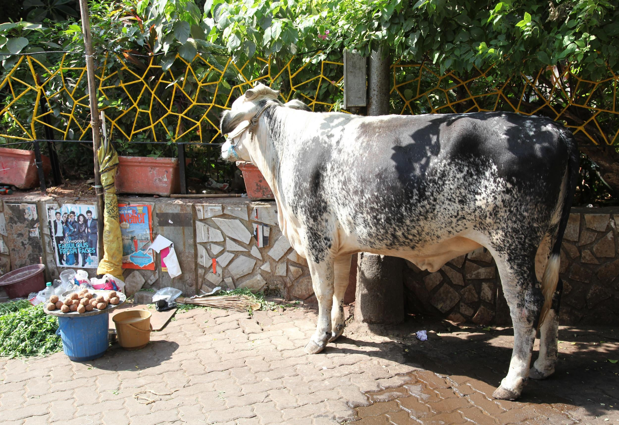 sacred cow Was reminded this week of how difficult it can be to challenge our sacred cows in nursing these are ideas or practice that we have held or done for so long that.
