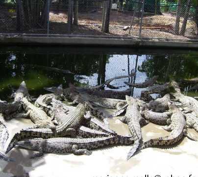 Charco en Crocodylus park