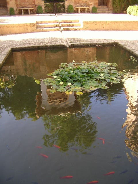 Photos of palace of yusuf iii images for Koi pond builders mn
