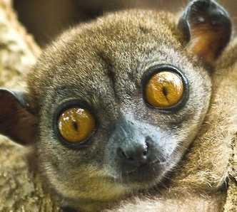 Grugno a I Lemuri del Madagascar
