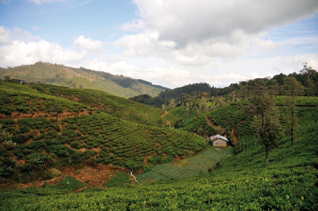 trip to nuwara eliya essay Nuwara eliya is better known as little england of sri lankathe climate, surroundings, and architecture of this area are different than other villages due to its cooler climate, it is the most important area for tea production in sri lanka.