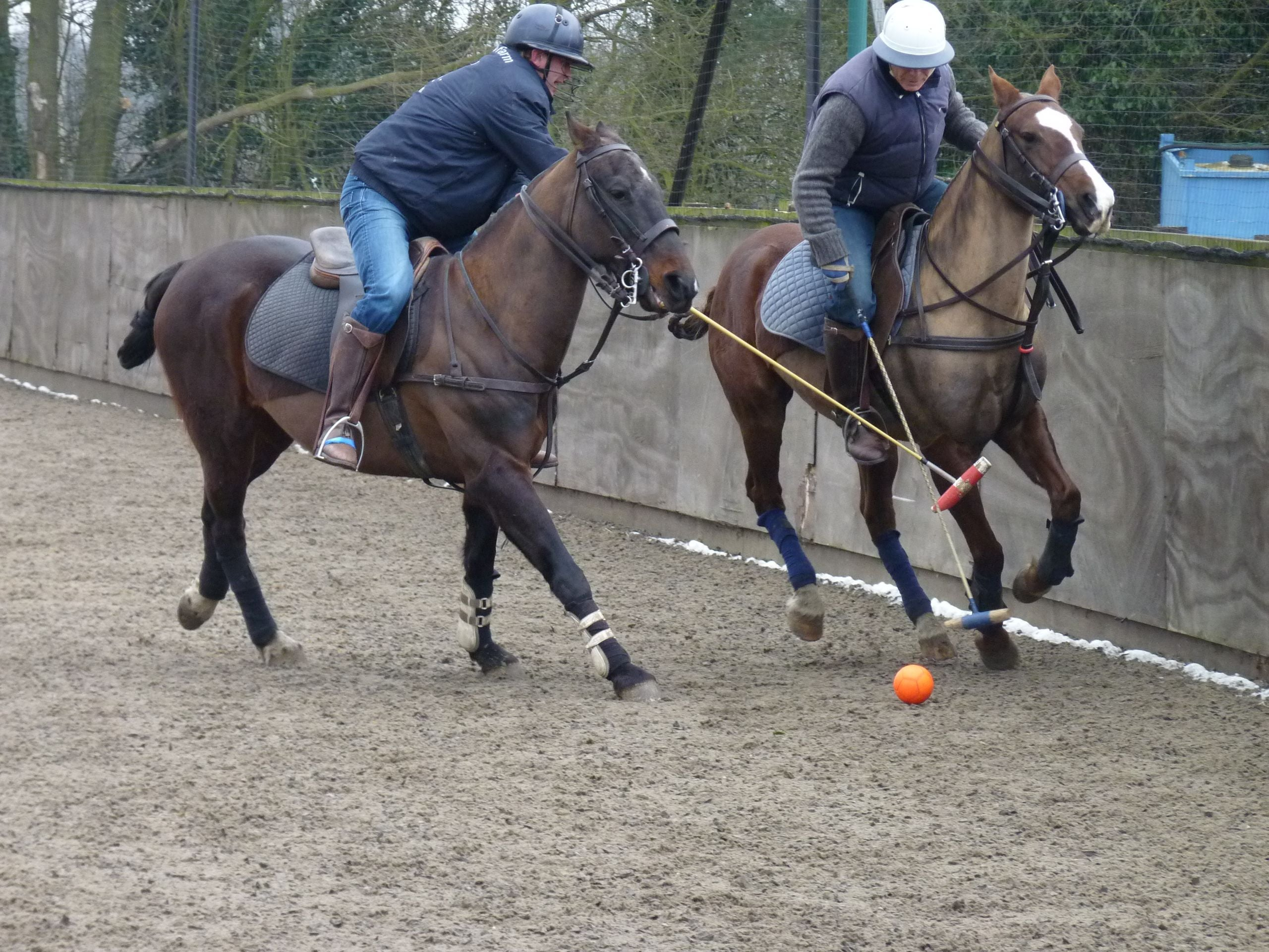 Mare in MHF Polo Club & Polo School