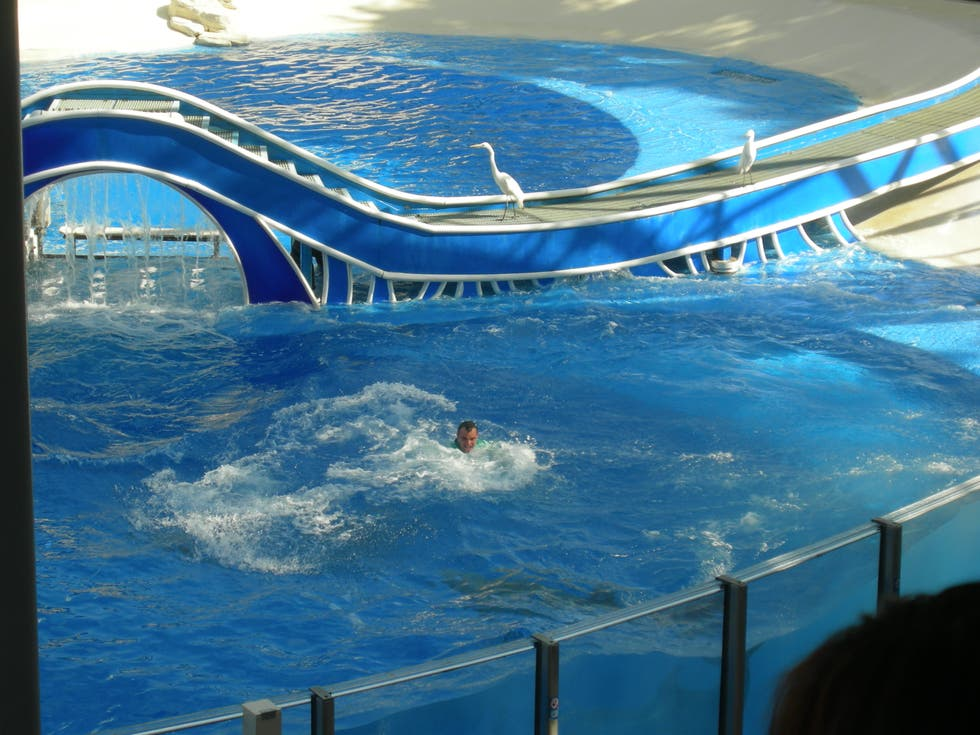 Piscina en Sea World Orlando