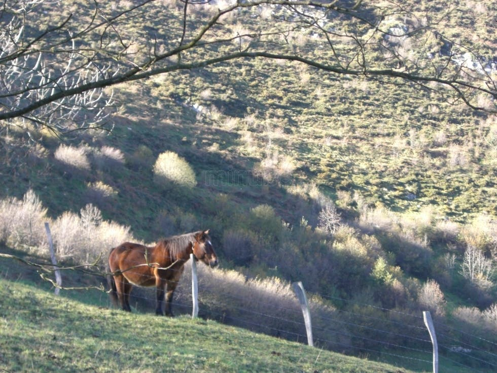 Animal en Sierra del Áramo
