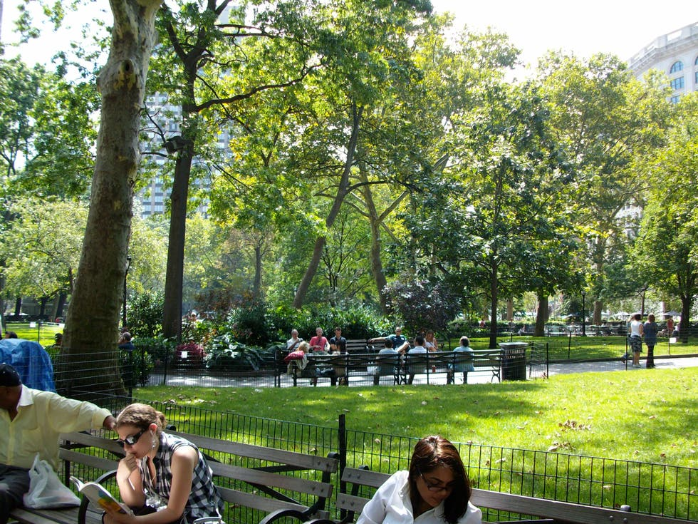 Árbol en Madison Square Park