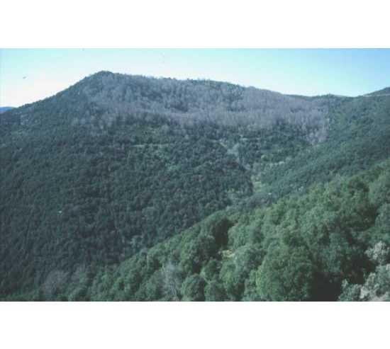 Selva en Parque Natural del Montseny