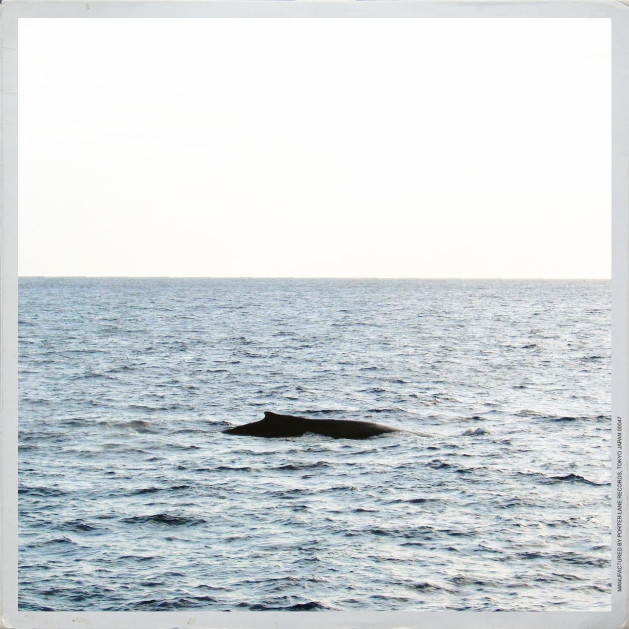 Whale in Maalaea