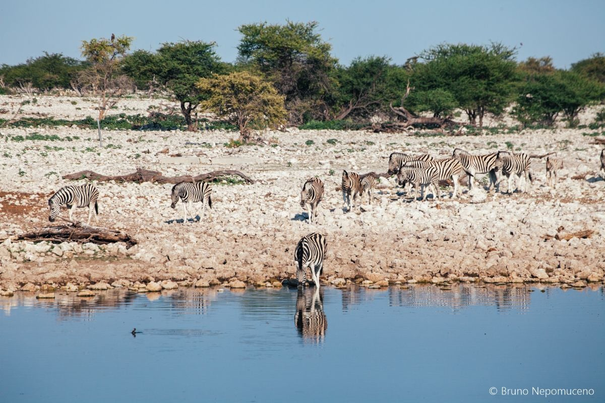 Wetland in Okaukuejo Waterhole