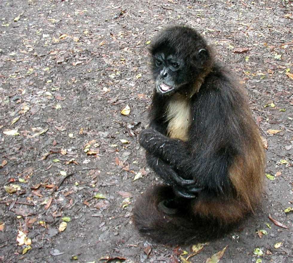 Mono en Monkeyland