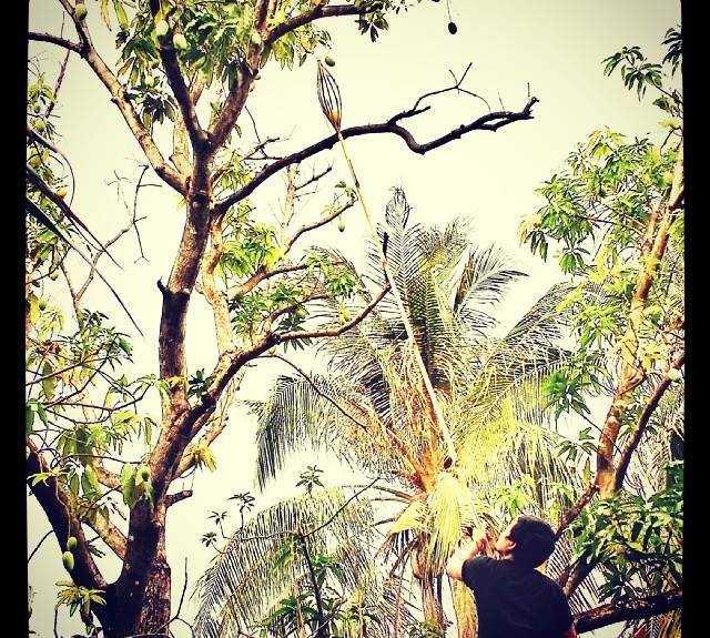 árvore em Kâmpóng Thum