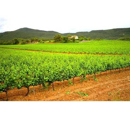 Field in La Llacuna