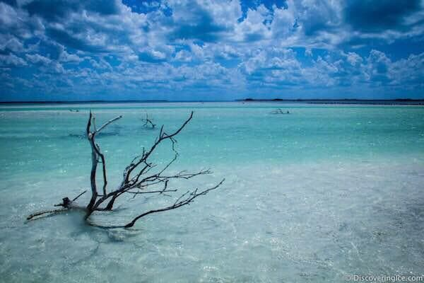Coral Reef in Isla Holbox