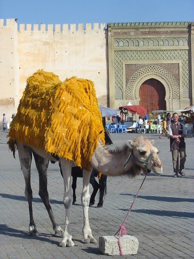 Animal en Meknes