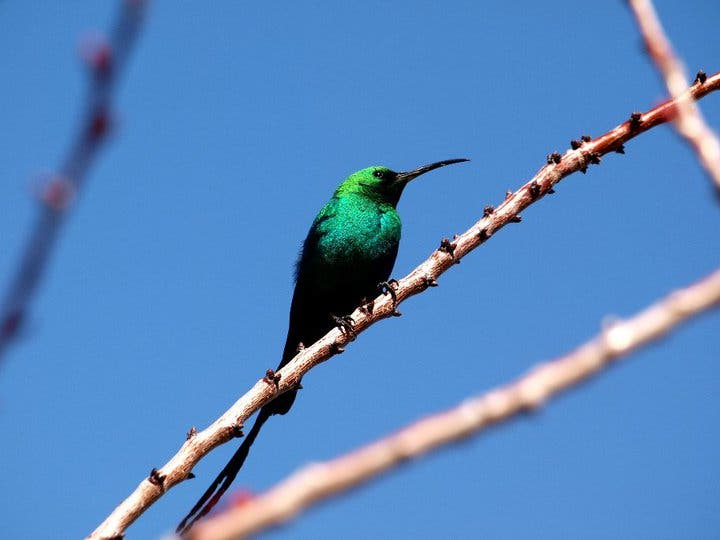 Bird in Northern Cape