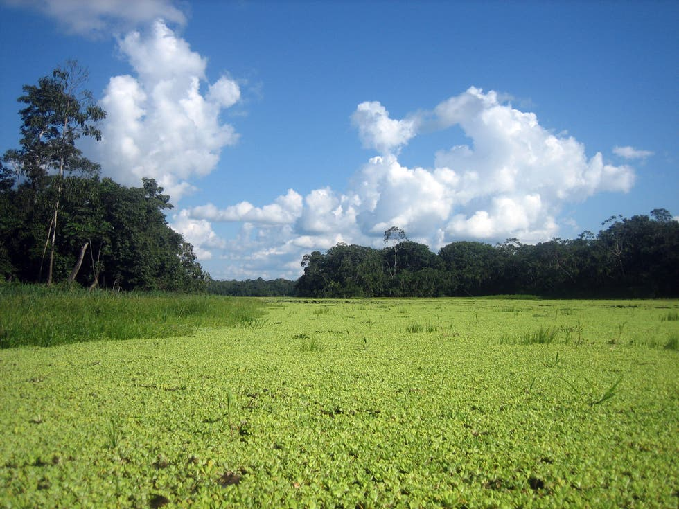 Meadow in Iquitos