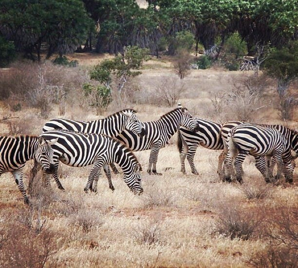 Aventura en Parque Nacional Tsavo East