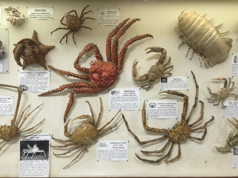 Invertebrado en Museu do Mar