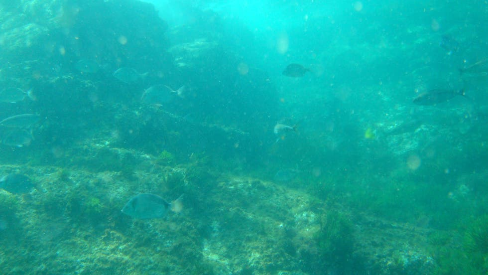 Swimming in Diving in Cíes