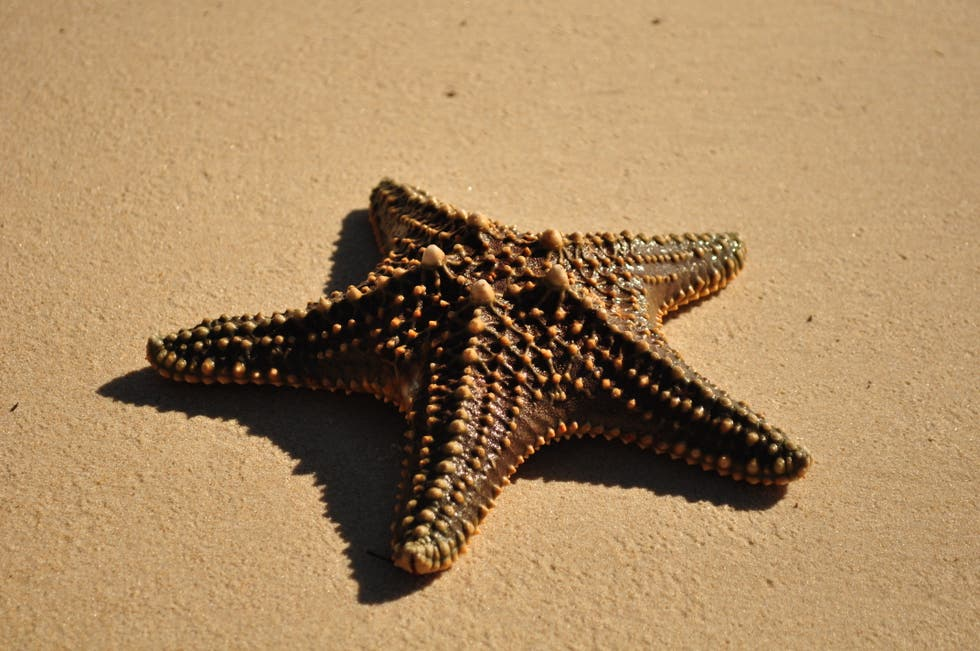 great keppel island Experience oz and nz ranked great keppel island number six in australia's top 10 islands to experience 2017 the beaches on great keppel are really what set it apart.