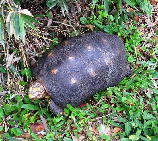 Reptil en Jardín Botánico Eloy Valenzuela