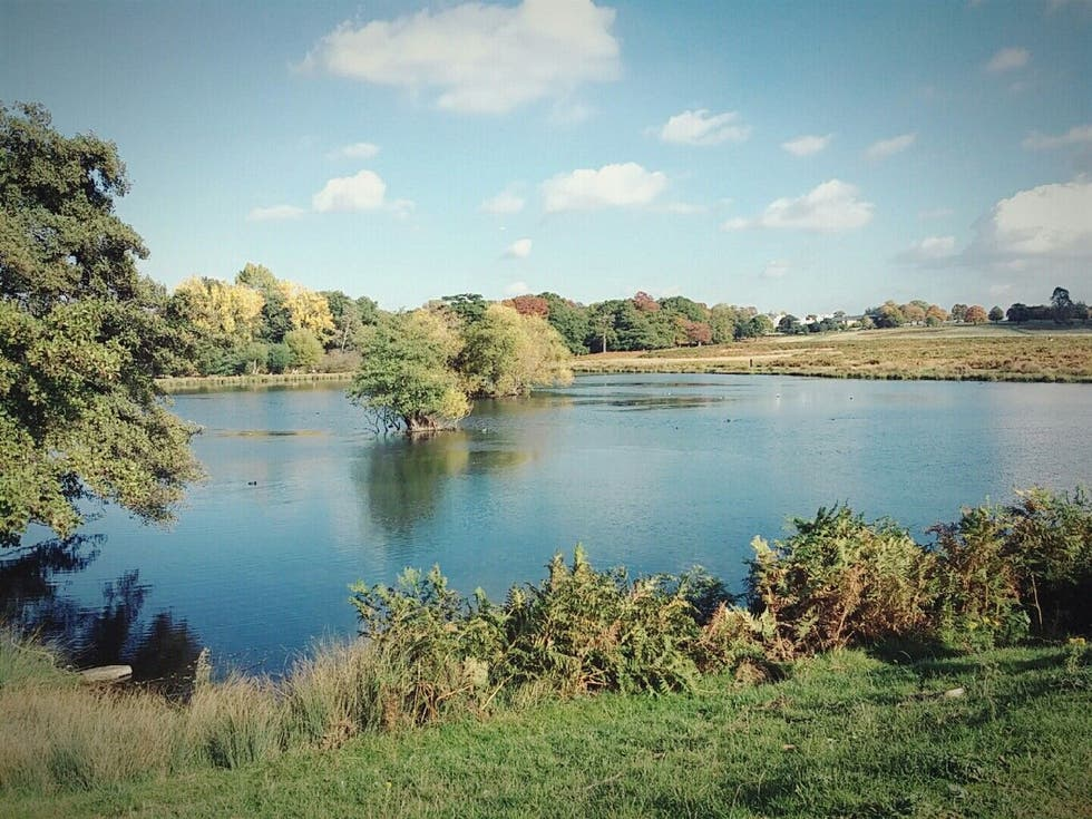 Naturaleza en Lago de Richmond Park