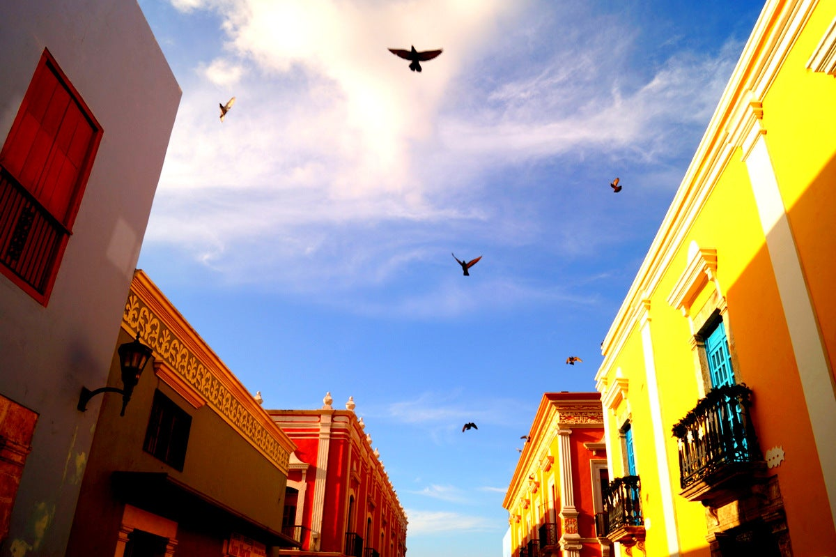 Yellow in Campeche