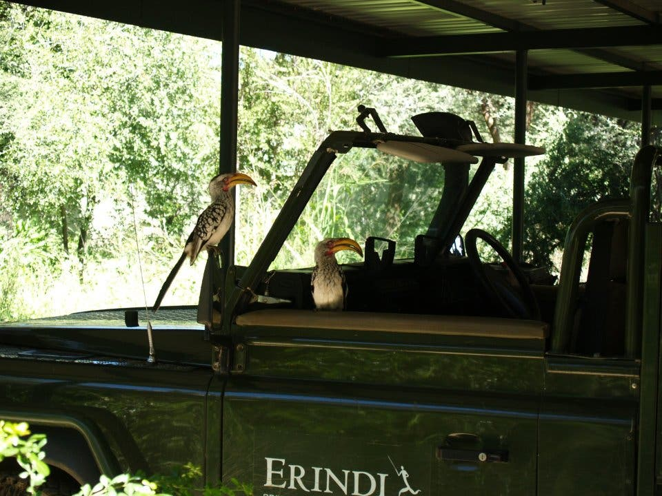Ventana en Erindi Private Game Reserve