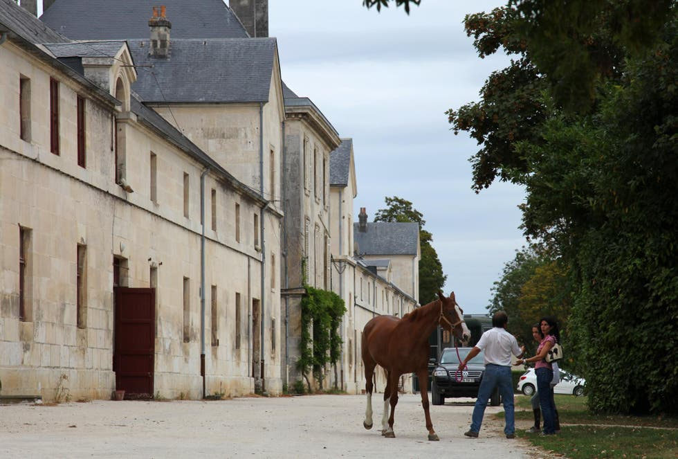 Caballo en Haras national