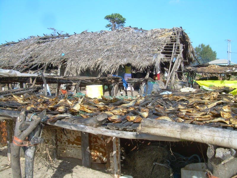 Thatching in Brufut