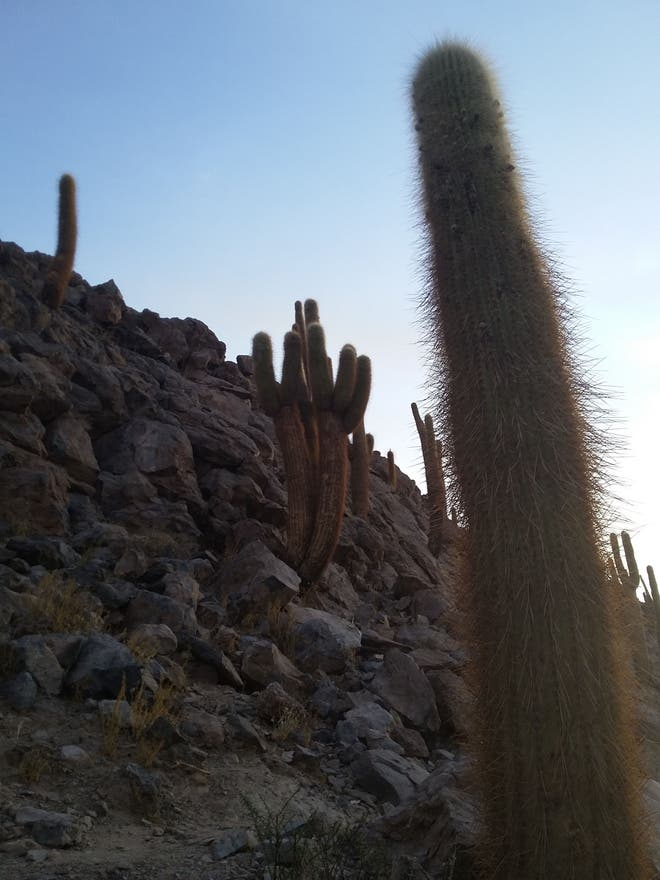 Pared en Valle de los Cactus