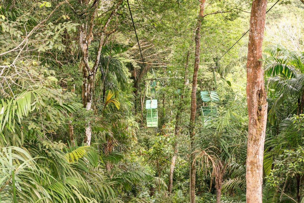 Jungla en Gamboa Rainforest Resort