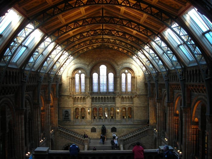 Vetro a Natural History Museum