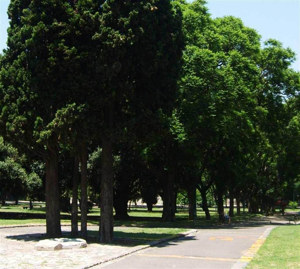 Planta en Plaza España