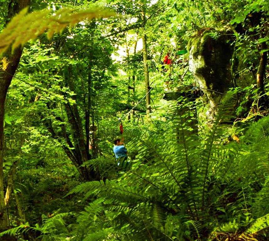 Verde en Selva asturiana: Aventura en Llanes