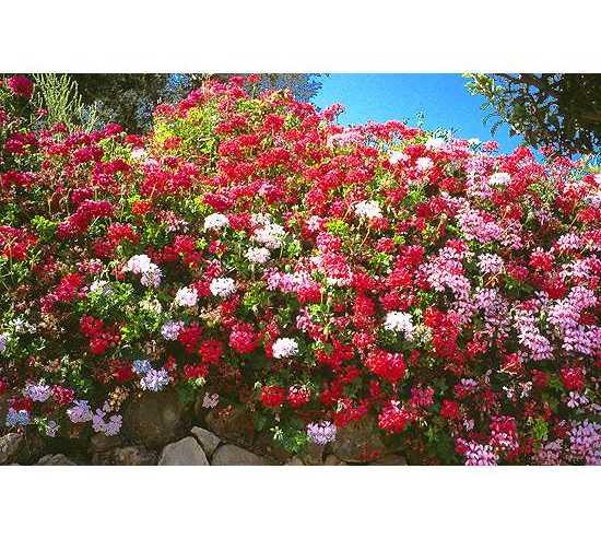 Flower in Redován