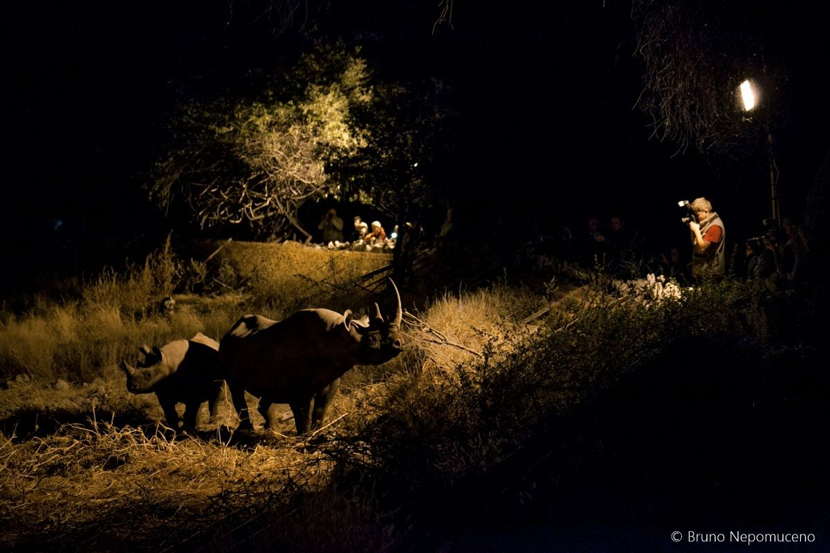 Night in Okaukuejo Waterhole