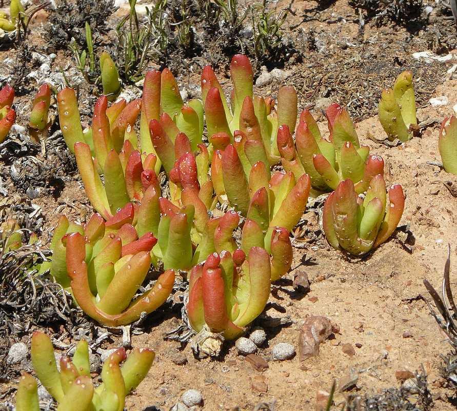 Fotos de jard n bot nico nacional del desierto karoo for Jardin del desierto