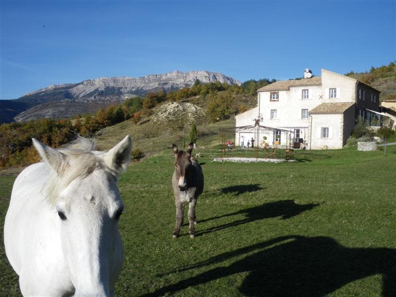 Animal in Digne-les-Bains