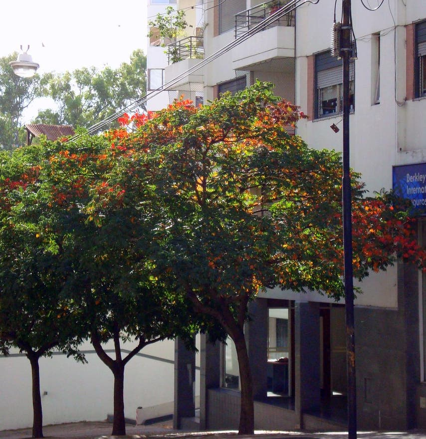 Árbol en Bar de la Plaza