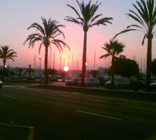 Árbol en Paseo Marítimo de Palma